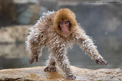 12 Humorous Animal Photos Of 2019 Comedy Wildlife Photography Awards, First Cut