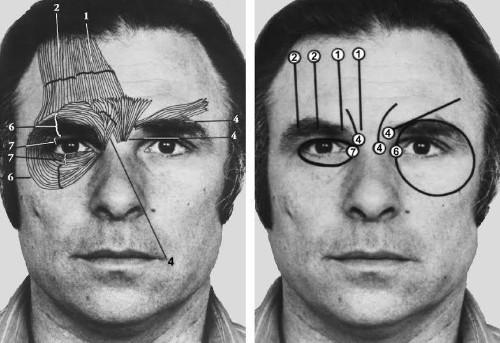 A Lie Detection Expert Explains How Your Mind Processes Faces And Lies