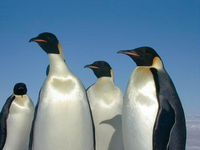 Penguins Can Taste Only Salty And Sour: A Quick Guide To Animal Tasting Quirks