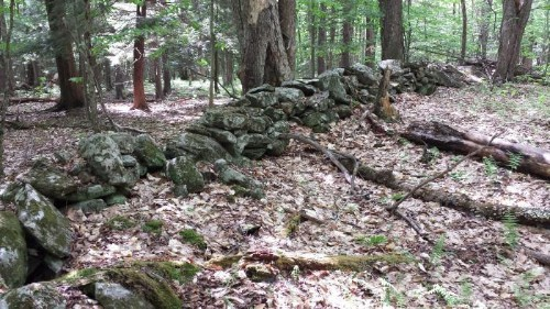 Stone Walls Hidden In The Woods Of New York And New Hampshire Reveal Earth's Magnetic Pole Shift