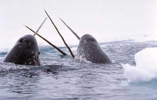 Forget Unicorns: Get Ready For the Narwhals