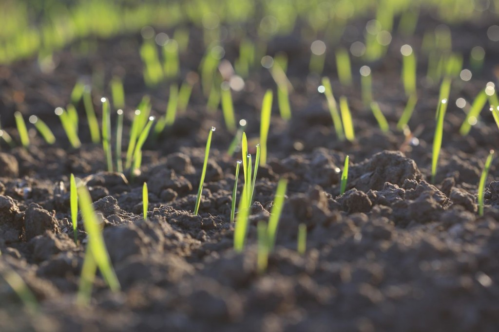 Council Post: Healthy Soil: Why And How To Invest In This Sustainable Opportunity