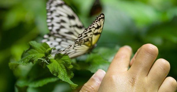 Butterflies Roam Free In A New York City Museum