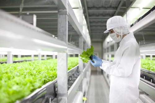 Japanese Robot Farm Company Going Big And Looking At New Vegetables
