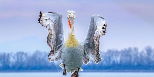 12 Stunning Pictures, Winners Of Bird Photographer of the Year 2019