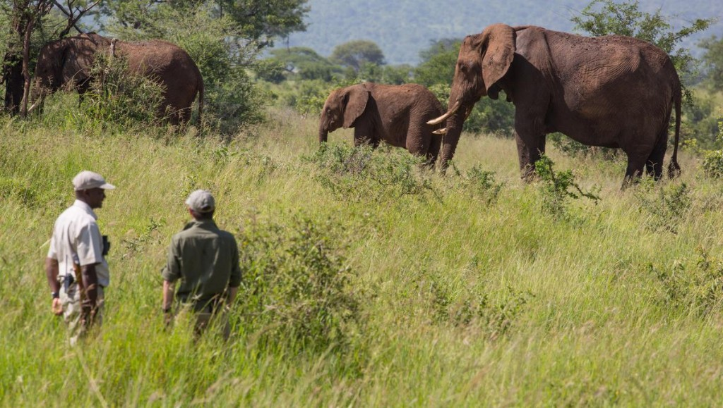 How Your Post-Pandemic Safari Trip Could Be Carbon Negative
