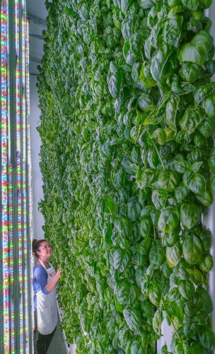 It's Called Vertical Farming, And It Could Be The Future Of Agriculture