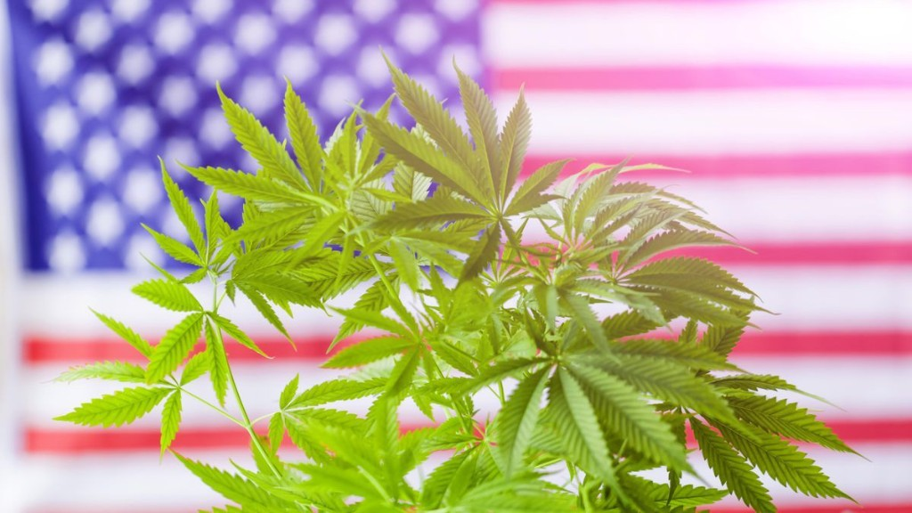 These States Will Be The Next To Legalize Marijuana