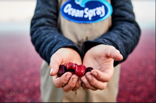 Ocean Spray Advances Sustainability And Answers To Consumer Demands