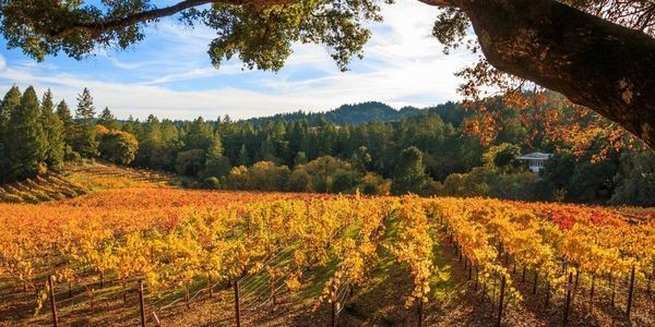 The Best Resorts In Napa Valley