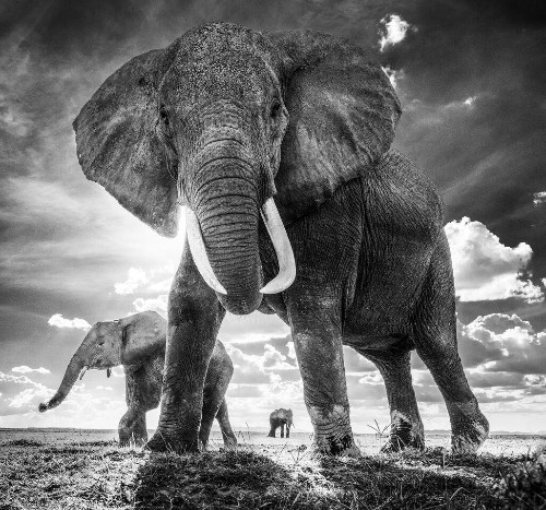 12 Breathtaking Wildlife Photos from David Yarrow's New London and Paris Exhibitions