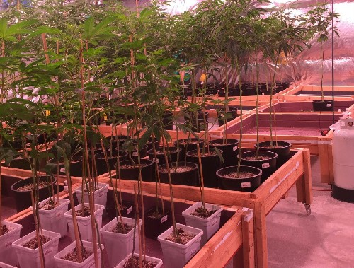 Introducing A Blog About The Legal Marijuana Industry (Which Is On Fire)