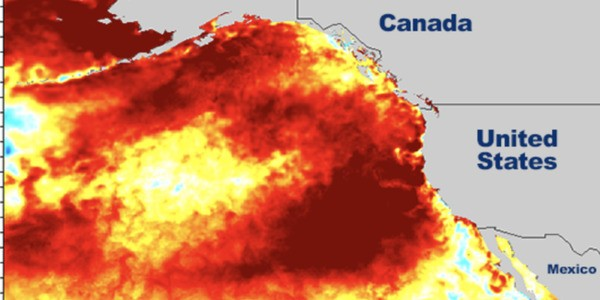 Another 'Warm Blob' Is Forming In The Pacific Ocean