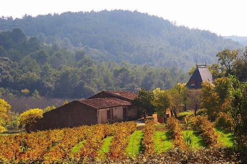Languedoc: French Wines With Terroir, Character And Personality