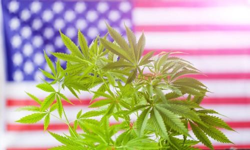 Top Congressional Chairman And Presidential Candidate File Marijuana Legalization Bills