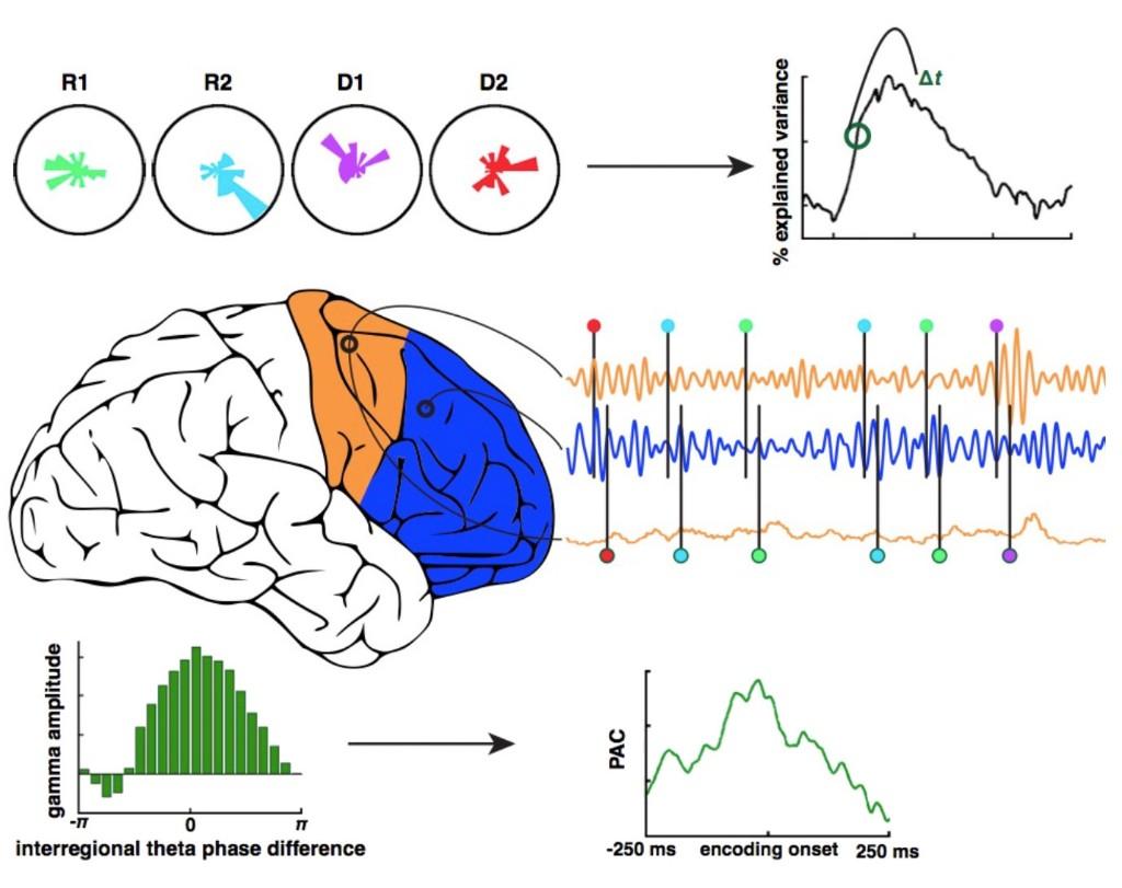 Brain Science - Magazine cover