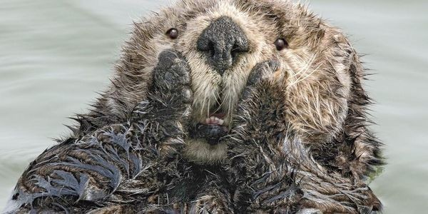 20 Funniest Finalists Of Comedy Wildlife Photography Awards 2019