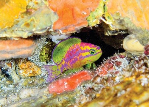 This New Fish Species Looks Like It Was Colored With Highlighter Pens