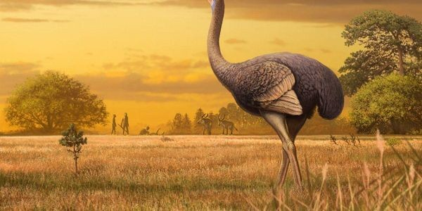 These Birds As Massive As Polar Bears Once Roamed Europe