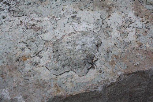 How Dinosaur Tracks Changed What We Knew About The Ancient Mediterranean