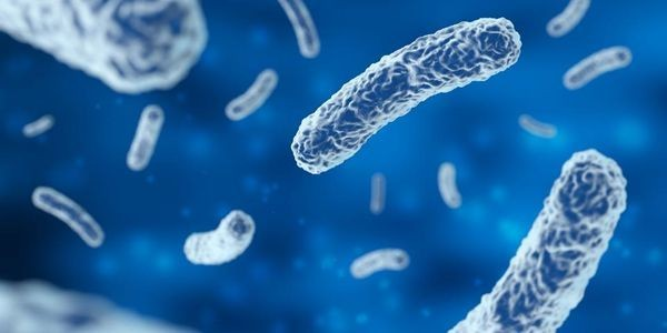 Could Stress Turn Our Gut Bacteria Against Us? New Research Looks For Answers