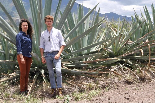Mezcal Silvestre: Is Mexico's Wild Mountain Spirit A Model Sustainable Industry?