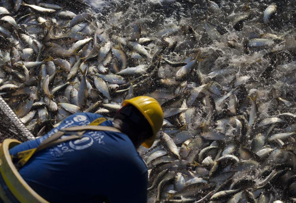 Overfishing In U.S. Reaches All-Time Low, NOAA Says