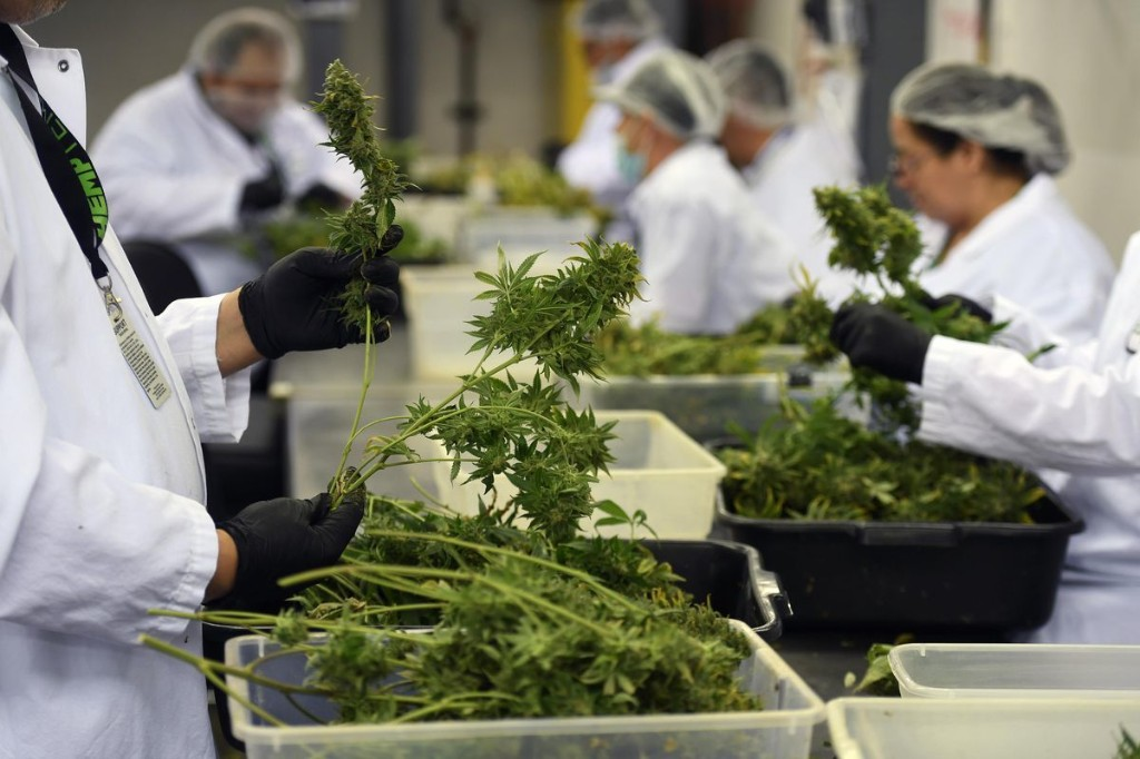 The Buzz Around The Cannabis Industry Keeps Growing But It Is Creating New Environmental Concerns