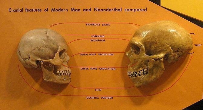 Neanderthal Man And The Science Of Human Uniqueness