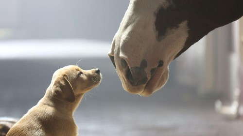 Could A Super Bowl Commercial Really Be Worth $10 Million? Suprisingly, Yes.