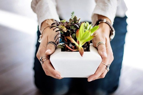 Think You Don't Need Houseplants? Science Says Different