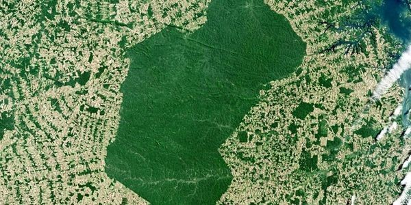 The Dynamics Have Changed But The Amazon Is Absolutely Being Deforested