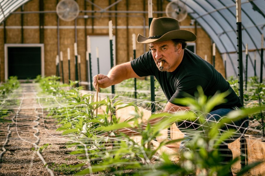 There And Back: Jim Belushi's Path From Cannabis Farming To Reality TV