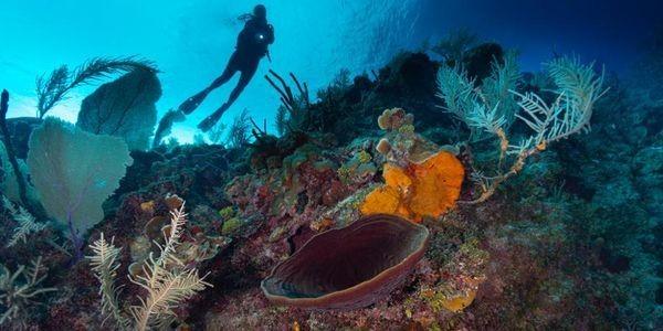 Scuba-diving - Cover