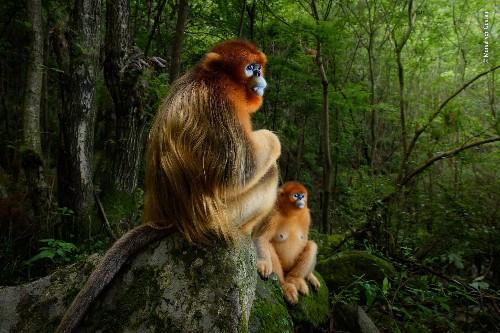 12 Extraordinary Wildlife Photographer Of The Year 2018 Winning Photos