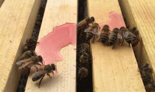 Artisanal Edible Cannabis Honey Causes A Buzz