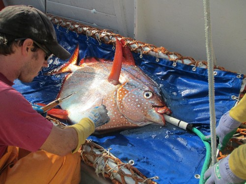 First Fully Warm-Blooded Fish Ruins All Science Textbooks