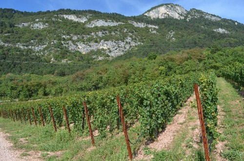 Trentodoc: Italy's Answer To Champagne Could Be Your Next Bubbly Obsession