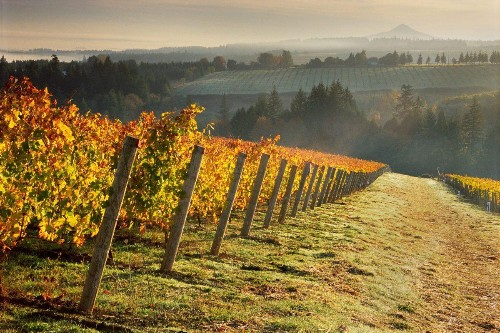 How Wine Allows One To Toss Aside Fear In Order To Collaborate