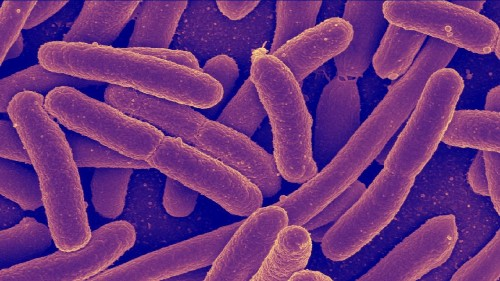 Early Exercise Promotes A Bacteria Health Boost