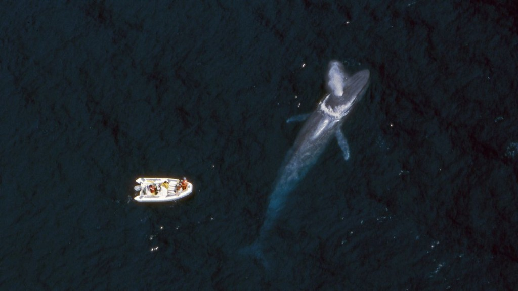 This New AI Technology Could Prevent Ships From Colliding With Whales