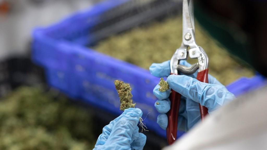 U.N. Removes Marijuana From List Of Most Dangerous Drugs