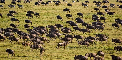 From The Serengeti To Masai Mara: 9 Best Adventure Destinations In East Africa