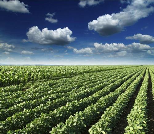 How GMOs Help Us Address Climate Change