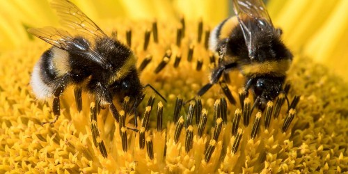 The Future of Drones Might Involve Bees