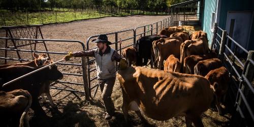 Silicon Valley startups go farming