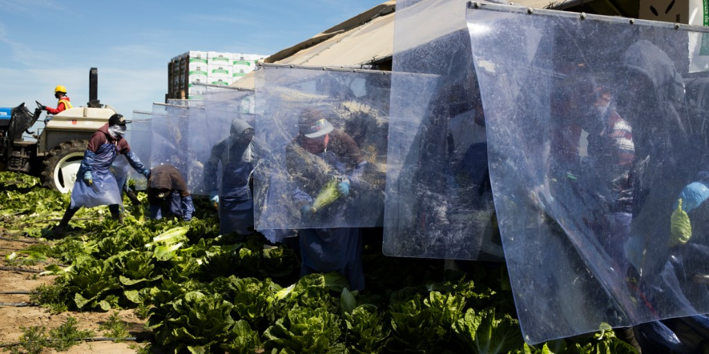 Every single worker at this U.S. farm has tested positive for coronavirus