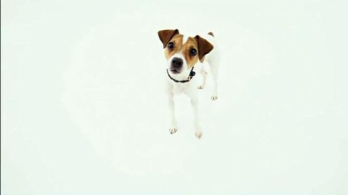 Rosetta Stone wants your dog to be bilingual