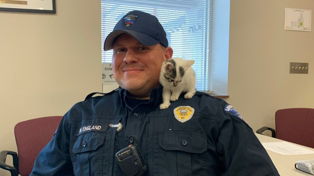 Stray kitten at airport named Boeing, adopted by safety officer