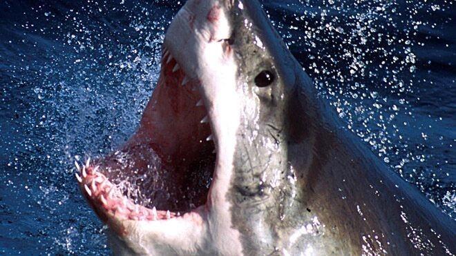 WARNING GRAPHIC IMAGE: Shark bites Texas beachgoer, who is rushed to hospital